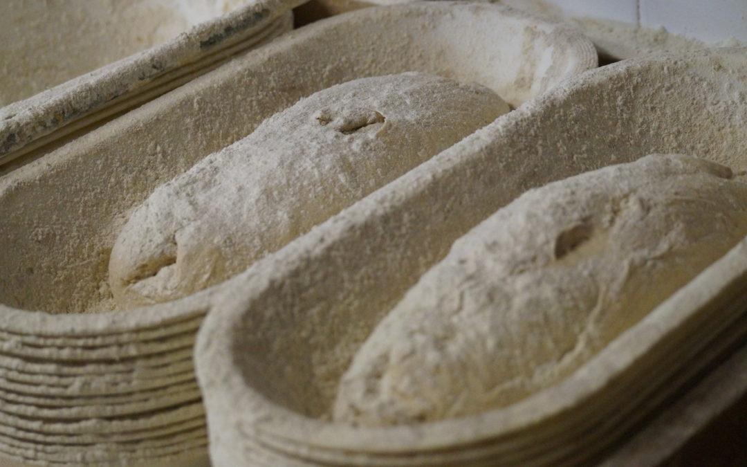 Jak powstaje nasz chleb?